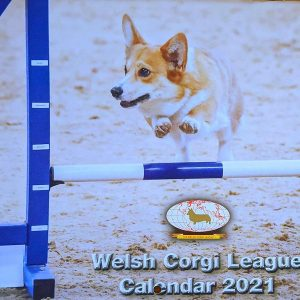 Welsh Corgi League Calendar