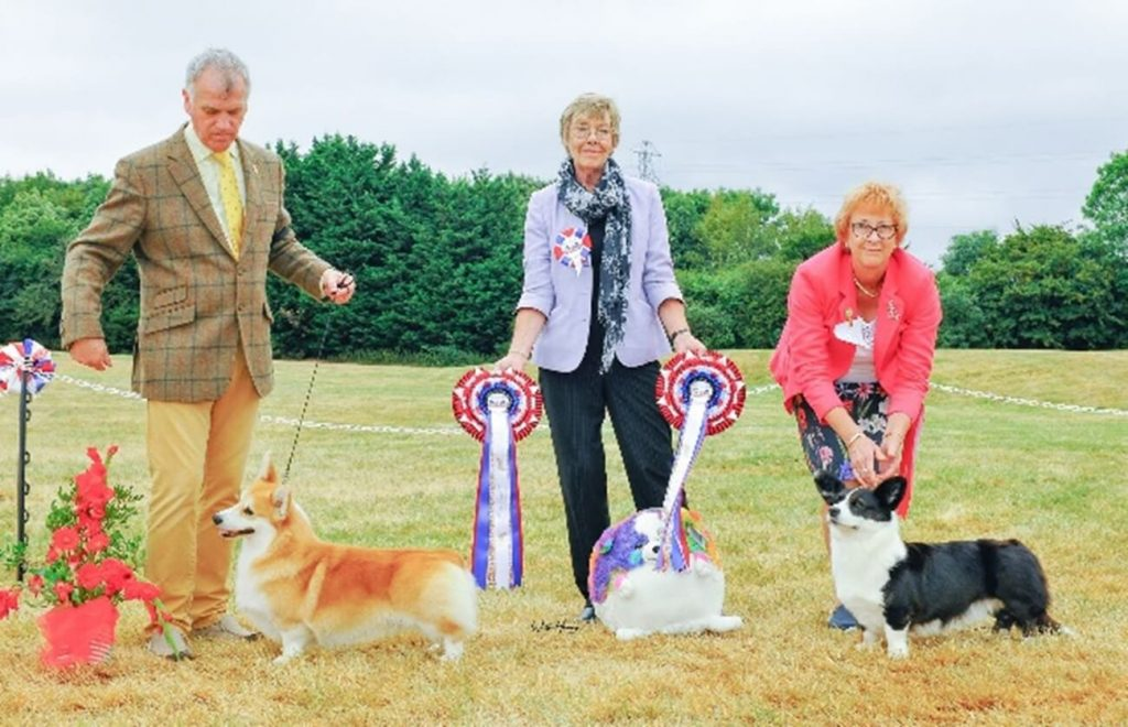 dog show Corgi winners